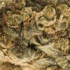 CBD Blüten White Widow Makrofoto Zoom