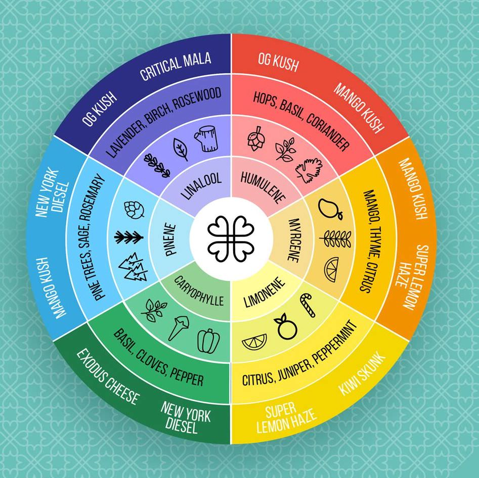 harmony terpene wheel