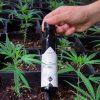 Bio Hanfsamen Öl Lifestyle Pflanzen