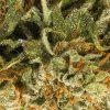 CBD Blüten Super Silver Haze Makrofoto Zoom
