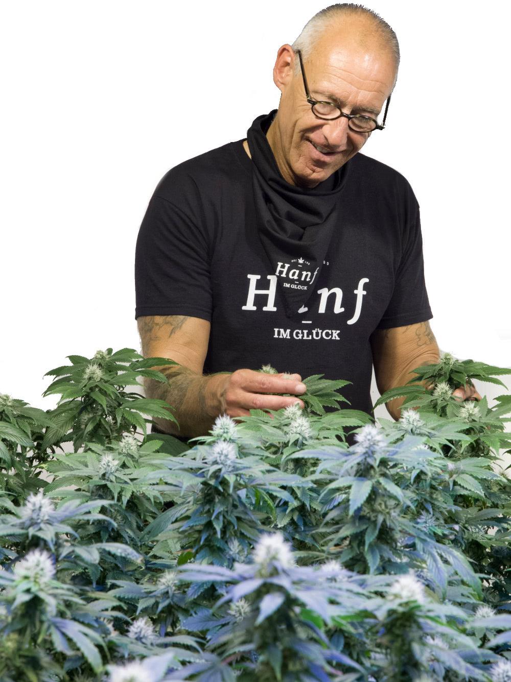 Ralf Kannheiser Hanf Experte auf der Plantage
