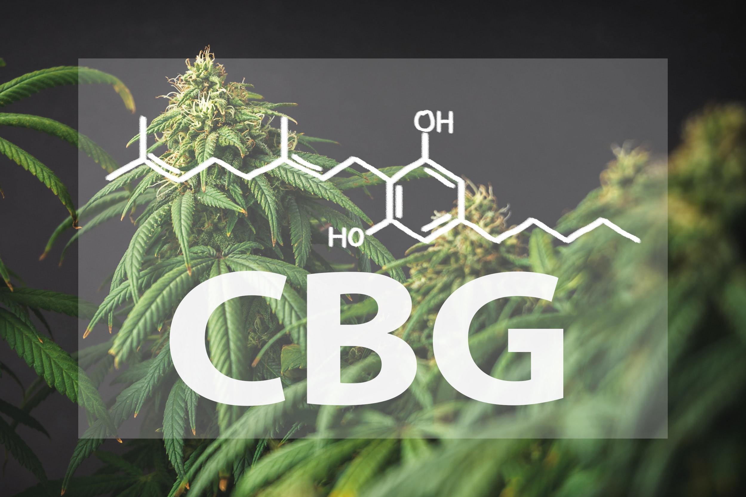 CBG Hanf Cannabinoid