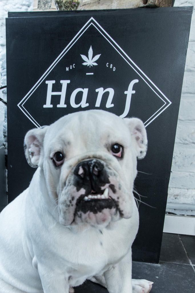 Hanf im Glück Maastricht Hund im Laden